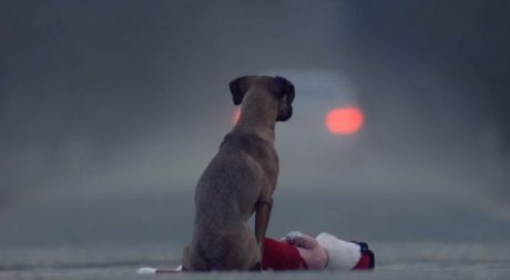 Video With A Strong Message: Be Responsible: Give, Adopt Wisely