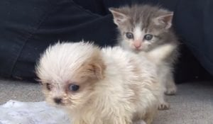 Rescued Puppy & Kitten Are Best Friends [VIDEO]