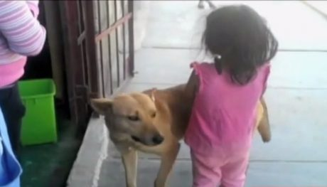 Dog Alerts Police To Lost Girl, Then Guides Them To Her Home