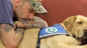 How PTSD Service Dogs Help Heal Wounded Warriors
