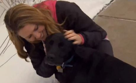 Two Rescue Dogs Who Saved Their Human's Lives