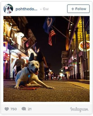 Poh the dog lies on a street in New Orleans at night with bright lights all around.