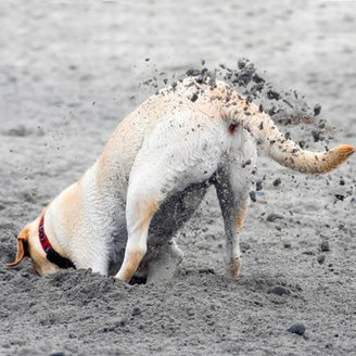 The Dirt On Dogs Who Dig - Dogtime