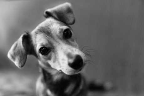 Pet Loss And Grief: Why Does It Hurt So Bad?