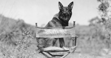 5 Dogs Who Changed History