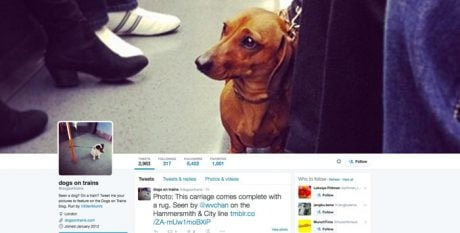 Follow This: 10 Best Doggie Twitter Accounts