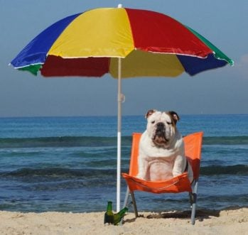 40 Pics Of Dogs Having The Best Summer Ever!