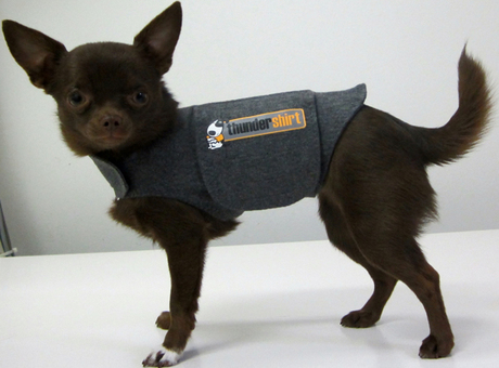 Thundershirt The Best Solution For Noise Anxiety Dogtime