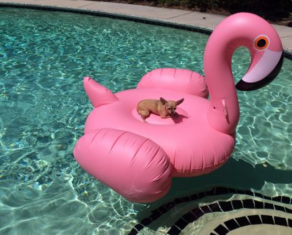 Summer Safety For Your Pets