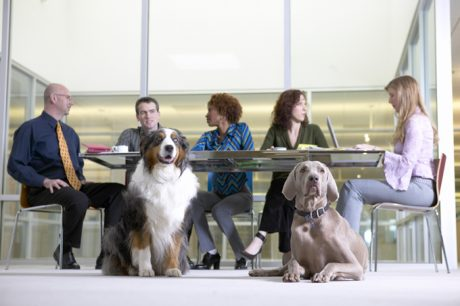 Do's And Don'ts Of Take Your Dog To Work Day