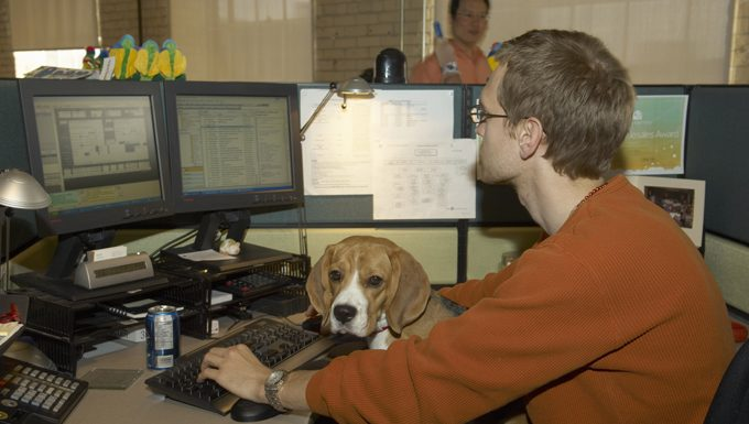 dog sitting at computer with owner