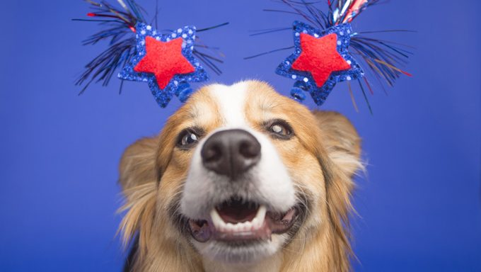 dog with 4th of july decorations on head