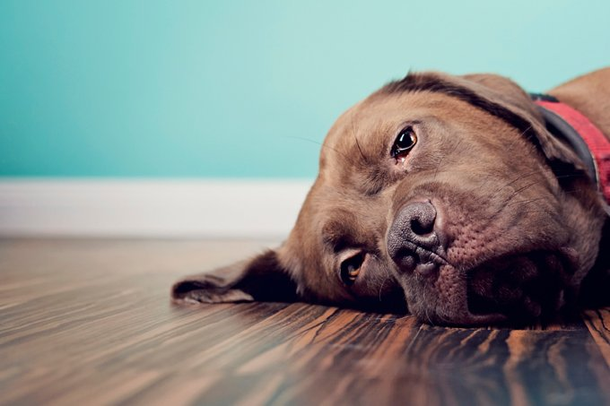 Top 10 Constipation Remedies For Dogs & Puppies - Dogtime