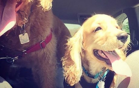 It's A Crime: Prosecuting People Who Leave Dogs in Hot Vehicles