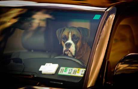 Tennessee Legalizes Smashing Car Windows To Save Dogs - Dogtime
