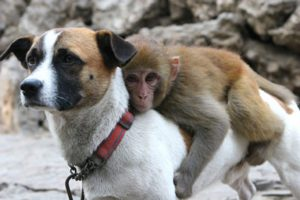 Monkey At Zoo Got Bullied By Other Monkeys So They Gave Him A Guard Dog