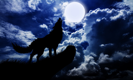 Dog Barking At The Moon Meaning