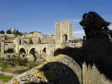 Spanish Town Gives Human Rights To Dogs And Cats