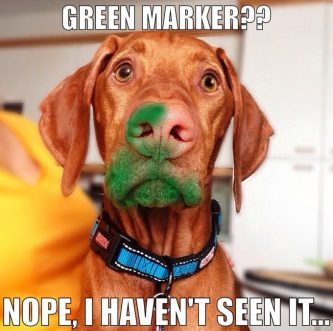 BUSTED: 26 Guilty Dogs [PICTURES]