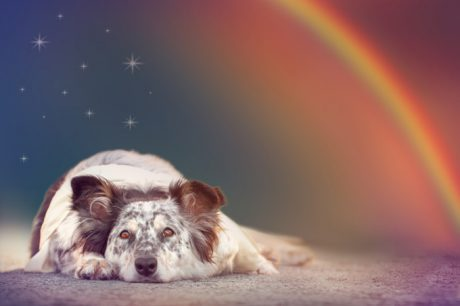 5 Awesome Meditations For Dogs To Prevent Anxiety And Relieve Stress