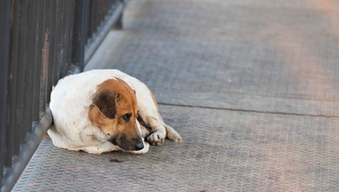lost dog on the street