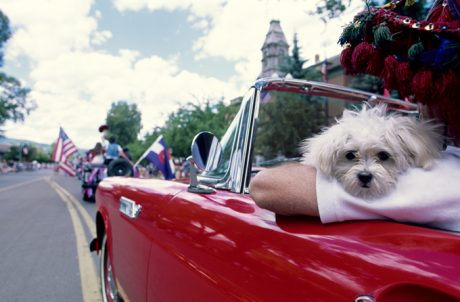 4th Of July Pet Safety Tips