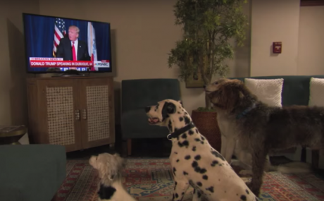 Jimmy Kimmel Finds Out If Dogs Obey Donald Trump