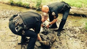 Police Rescue Dog That Was Stuck In The Mud For 60 Hours