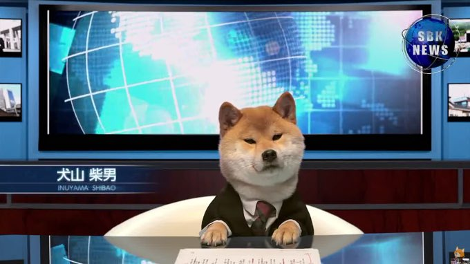 doge presents the shiba in-news  video