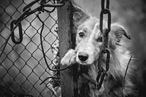 YES! New York City Launches Animal Abuser 'Do-Not-Adopt' Blacklist