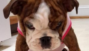 37 Grumpy Puppies Who Have Had Enough And Aren't Gonna Take It Anymore [PICTURE GALLERY]