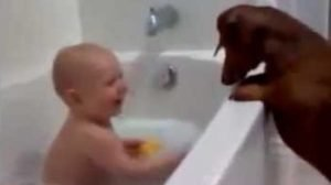 8 Dogs Who Make Babies Laugh [VIDEO]