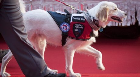 Celebrate National Service Dog Month September 2017