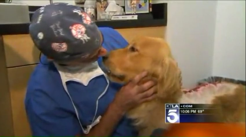 Vet kisses Golden Retriever whose back is covered in burned raw flesh.