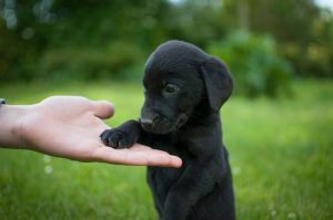National Black Dog Day October 1st: Adopt A Black Dog