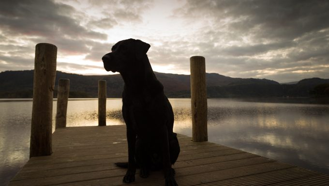 black dog on pier at sunset