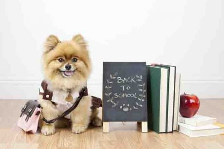 Back To School…For Your Dog