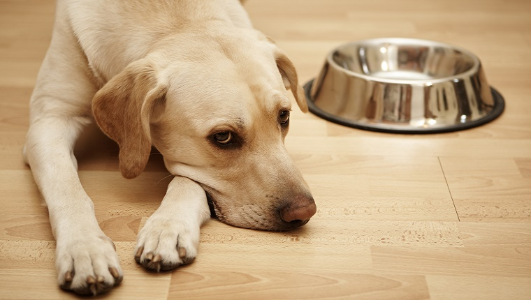 A dog lies next to an empty food bowl.