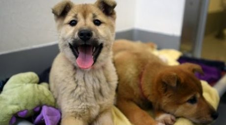 57 Dogs Saved From South Korean Meat Market
