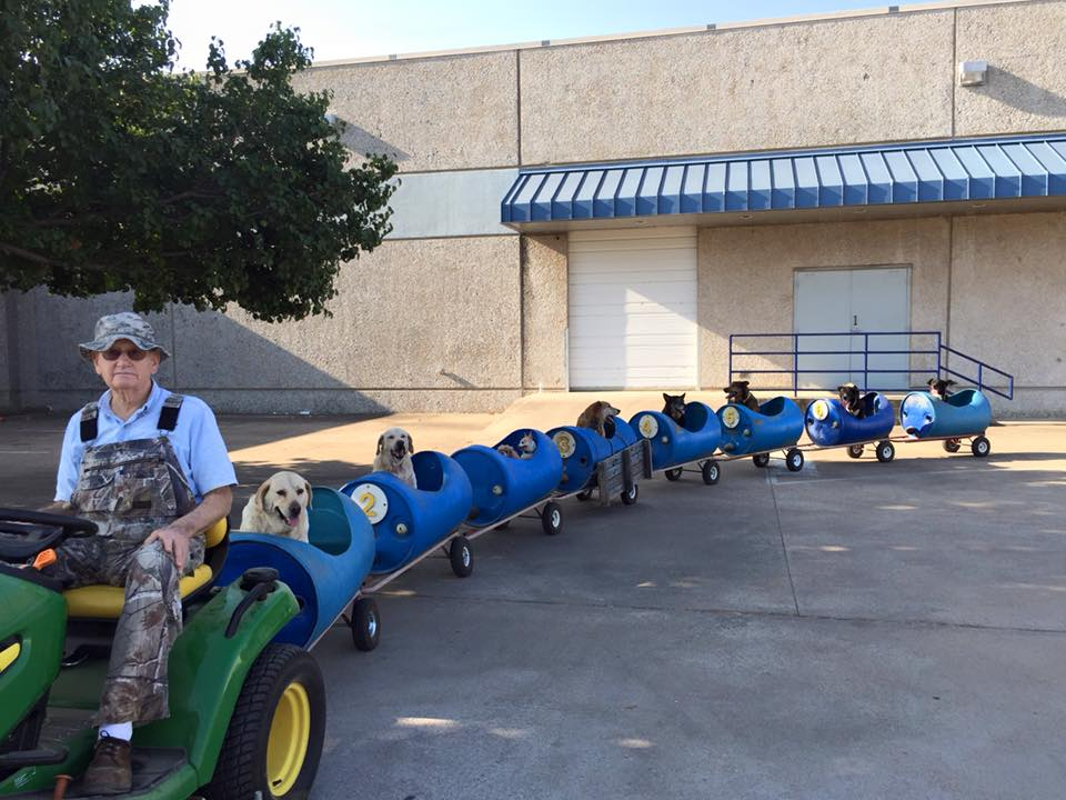 fort-worth-dog-train