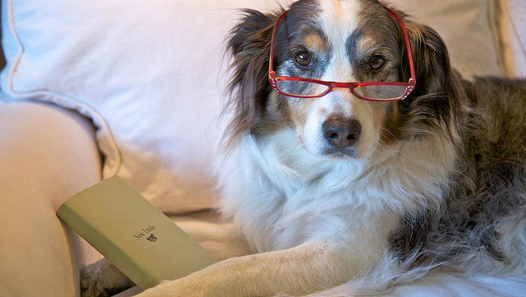 "An older dog wears a pair of reading glasses and is holding a book titled ""New Tricks."""