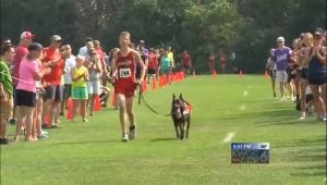 German Shepherd Service Dog Helps His Boy Run Cross Country