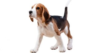 5 Of The Most Popular Dog Breeds In The World