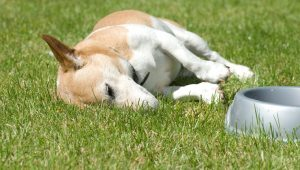 Caring For Canine Colitis: Symptoms, Causes, And Treatments For Dogs