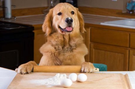 7 Homemade Dog Food & Treat Recipes For The Holidays