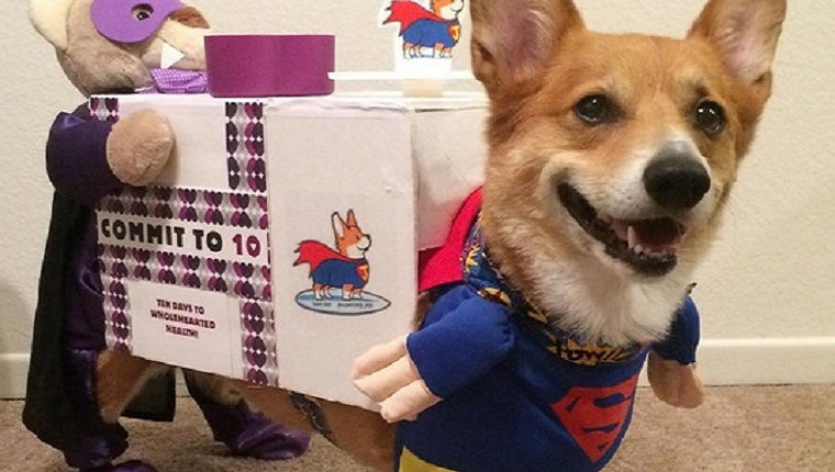 23 awesome dog halloween costume ideas pictures dogtime