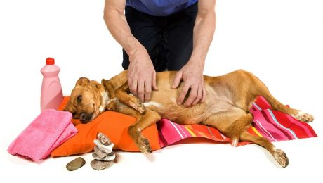Life Hacks For Dogs: 5 More Natural Home Remedies For Canine Conditions