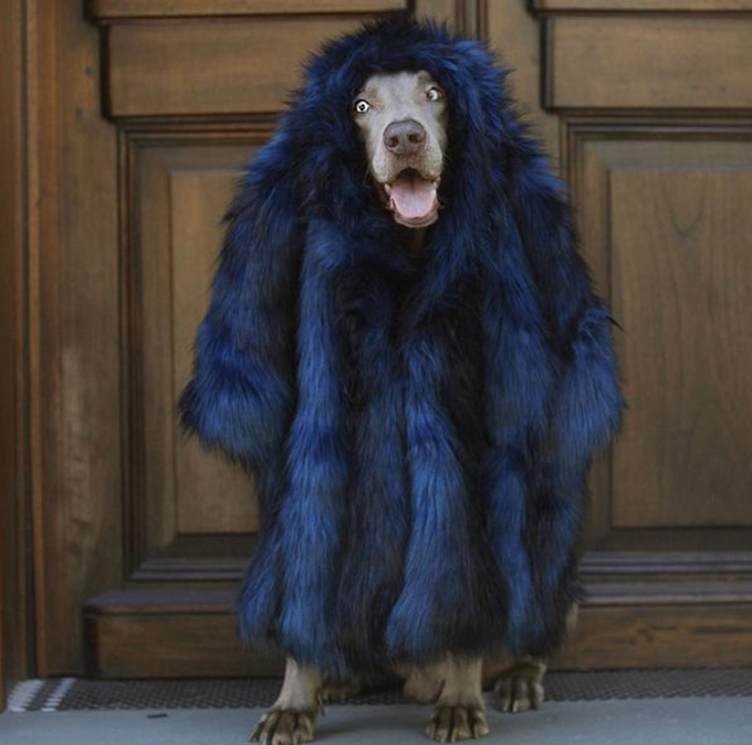 dog-styler-fashion-week-1