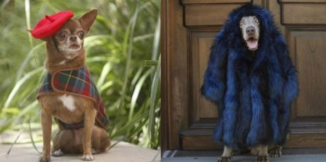 Dogs Get The Model Treatment At NYC Fashion Week