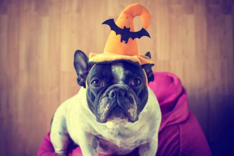 10 Halloween Safety Tips For Your Dog